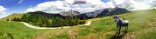 Alpen Panorama Mit Kuh Auf Der Alm