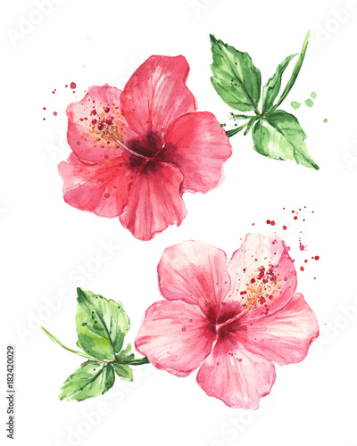 Hibiscus flowers, Watercolor painting