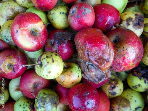 Valokuva Rotten apples.,top view