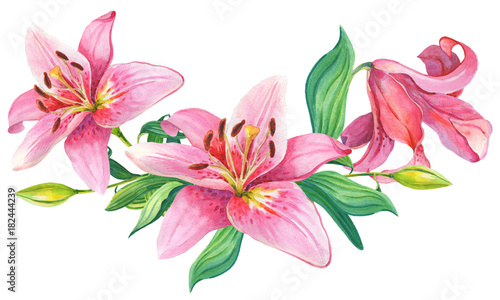 Photo  Pink lilies.Floral Illustration
