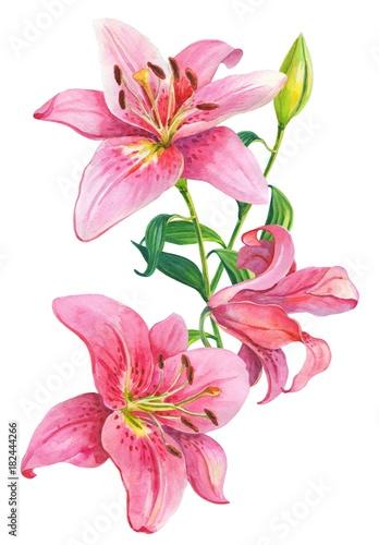 Pink lilies.Floral Illustration Wallpaper Mural