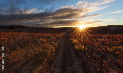 Sun spikes over a red vineyard in Estella, Navarra