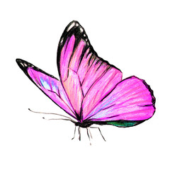 beautiful pink butterfly, isolated  on a white