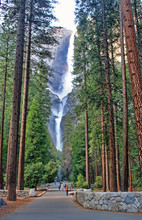 Yosemite Falls Seen Through The Trees On The Valley Floor In Yosemite National Park, California