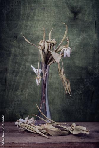 Valokuvatapetti Still life-. dry flowers tulips