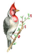 Watercolor Parrot Bird