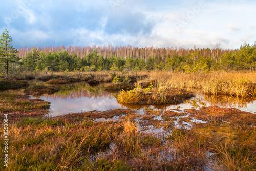 Stampa su Tela Landscape, Sulphur isotopic bog