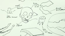 Medical Drawings Draw Science ...
