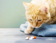 Red Kitten And Orange Pills Closeup