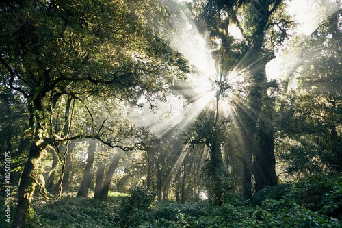 Mysterious morning in tropical rainforest