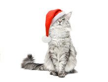 Grey Cat In Santa Christmas Re...