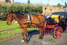 Horse And Carriage At Colosseu...