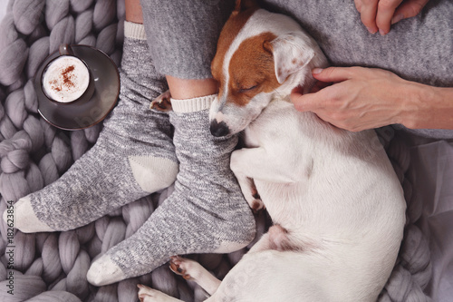 Obraz Cozy ,lazy day at home, cold weather, warm blanket. Dog sleeping on female feet. Relax, carefree, comfort lifestyle. - fototapety do salonu