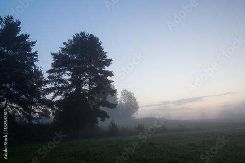 Spoed Foto op Canvas Grijze traf. Misty meadow landscape at dawn