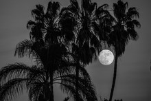 Moon Rises Behind Trees