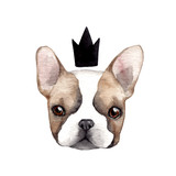 Cute french bulldog with crown. - 182669470