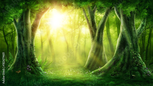Foto auf Gartenposter Wald Dark magic forest
