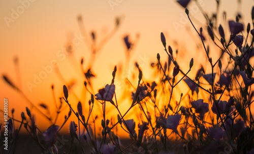 Poster Oranje eclat flowers on the grass at sunset