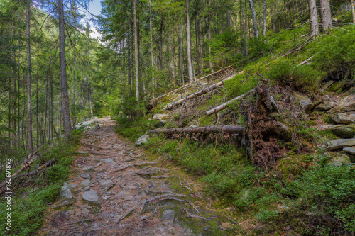 Tuinposter Weg in bos The dust path in the forest with green trees on the wayside