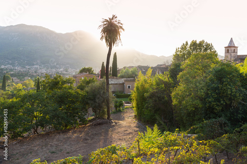 view over the valley of Soller, palm tree and back light, romantic mountain village, Biniaraix, Serra de Tramuntana, Majorca, Balearic Islands, Spain, Europe