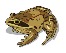 Images Of A Frog