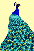 Portrait Of A Peacock With A B...