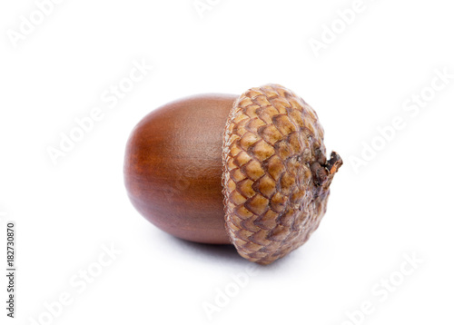 Ripe acorns isolated on a white background