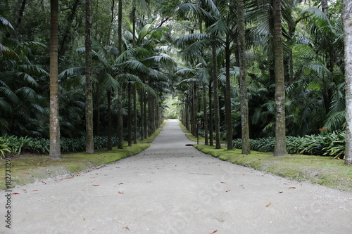 Tuinposter Weg in bos Parque Terra Nostra, Açores