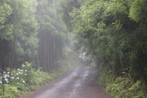 Caminho para o Miradouro da Boca do Inferno, Açores Canvas Print