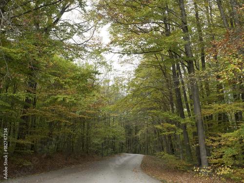 Foto op Canvas Weg in bos Lac de Michelbach en Alsace. Sentier de promenade