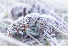 Macro Closeup Of Frost Ice Cry...