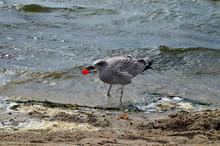Seagull Confusing Plastic Cap ...