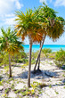 Cayo largo beach Cuba wtih palms