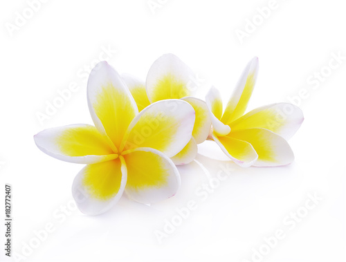 Foto op Canvas Frangipani beautiful white plumeria rubra flowers isolated on White background