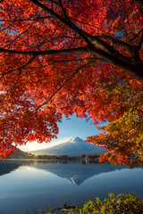 FototapetaColorful Autumn Season and Mountain Fuji with morning fog and red leaves at lake Kawaguchiko is one of the best places in Japan