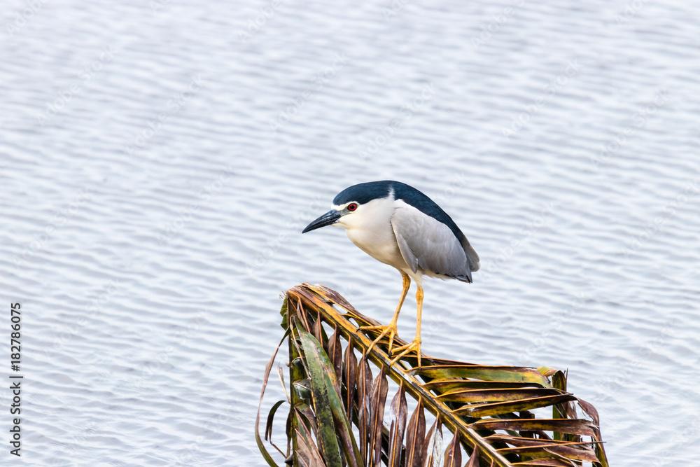 Water gulls bird from Backwater in Kerala