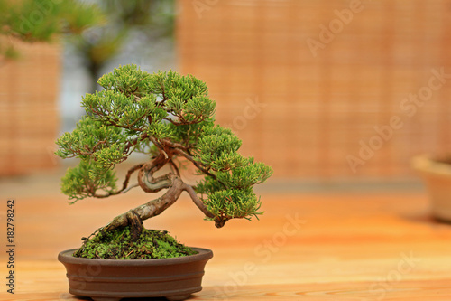 Tuinposter Bonsai Бонсай