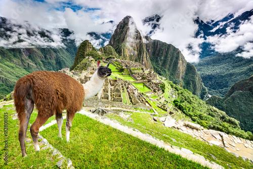 Fotografie, Obraz  Machu Picchu, Cusco, Peru in South America