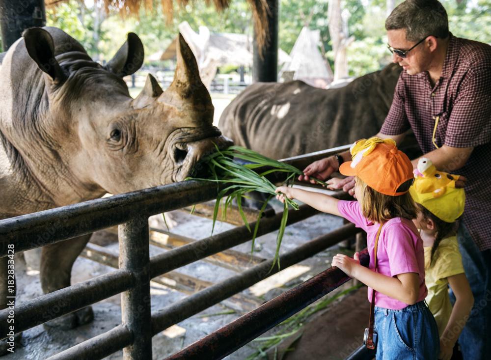 Fototapeta Young caucasian girls feeding rhino at the zoo