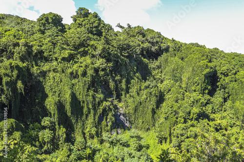Foto op Aluminium Oceanië Rain forest landscape view on Maui, Hawaii
