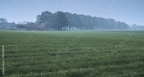 Spoed Foto op Canvas Khaki Meadow with row of autumn trees and ruined house in mist.