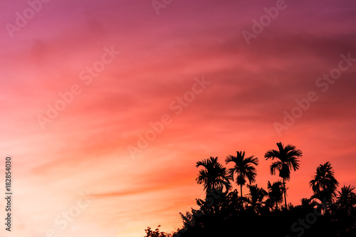 Fotobehang Jacht sunset with silhouette palm tree in forest and colorful sky