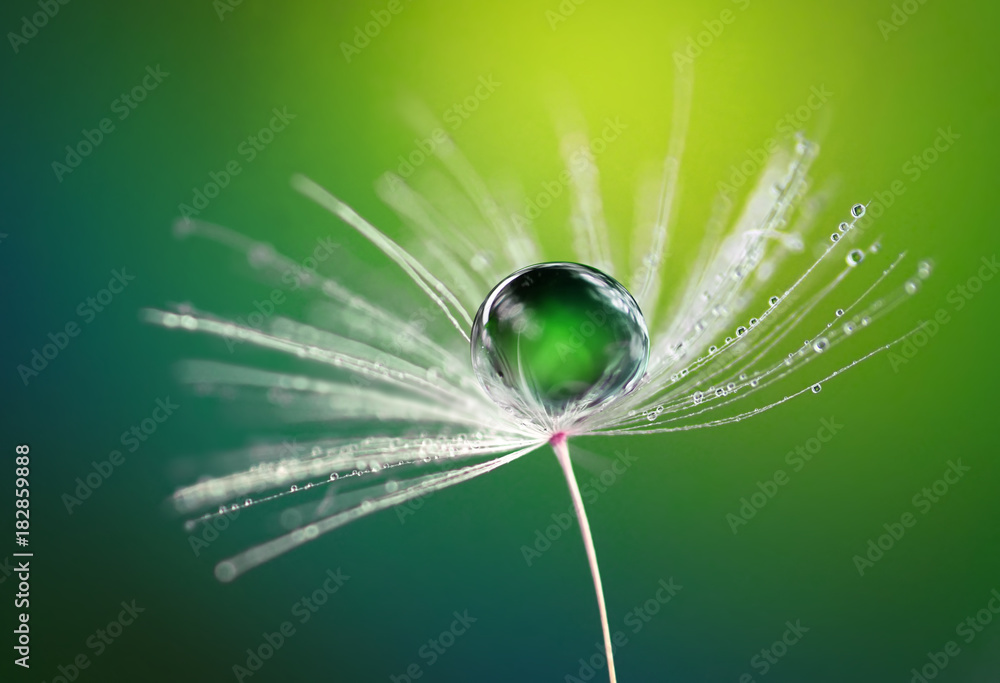 Fototapety, obrazy: Beautiful dew water drop on a dandelion flower on blurred green background  macro.  Soft dreamy elegancy artistic image tenderness and fragility of nature.