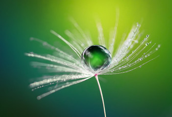 Beautiful dew water drop on a dandelion flower on blurred green background macro. Soft dreamy elegancy artistic image tenderness and fragility of nature.