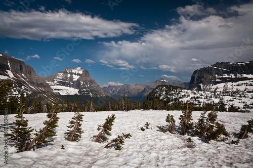 Fotografie, Obraz  Glacier National Park in early summer