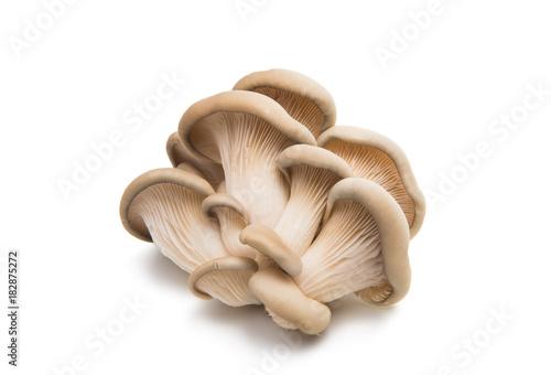 oyster mushroom isolated