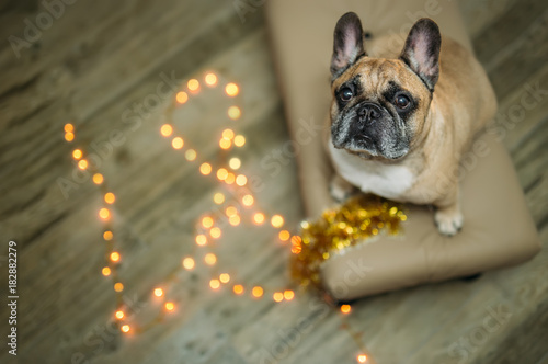 Papel de parede  background new year 2018 christmas, year dog, french bulldog