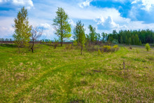 A Rural Road In A Field Between Trees And Grass Under A Summer Blue Sky With White Clouds. Green Spring In Russia.