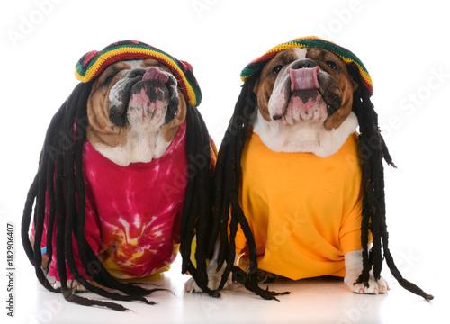 Fotografie, Obraz two dogs with dreadlock