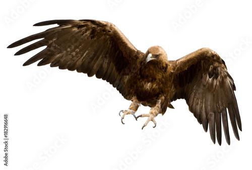 Garden Poster Eagle a golden eagle, isolated